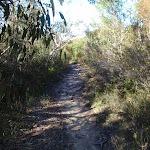 Thick heath vegetation on the Willunga track (156412)