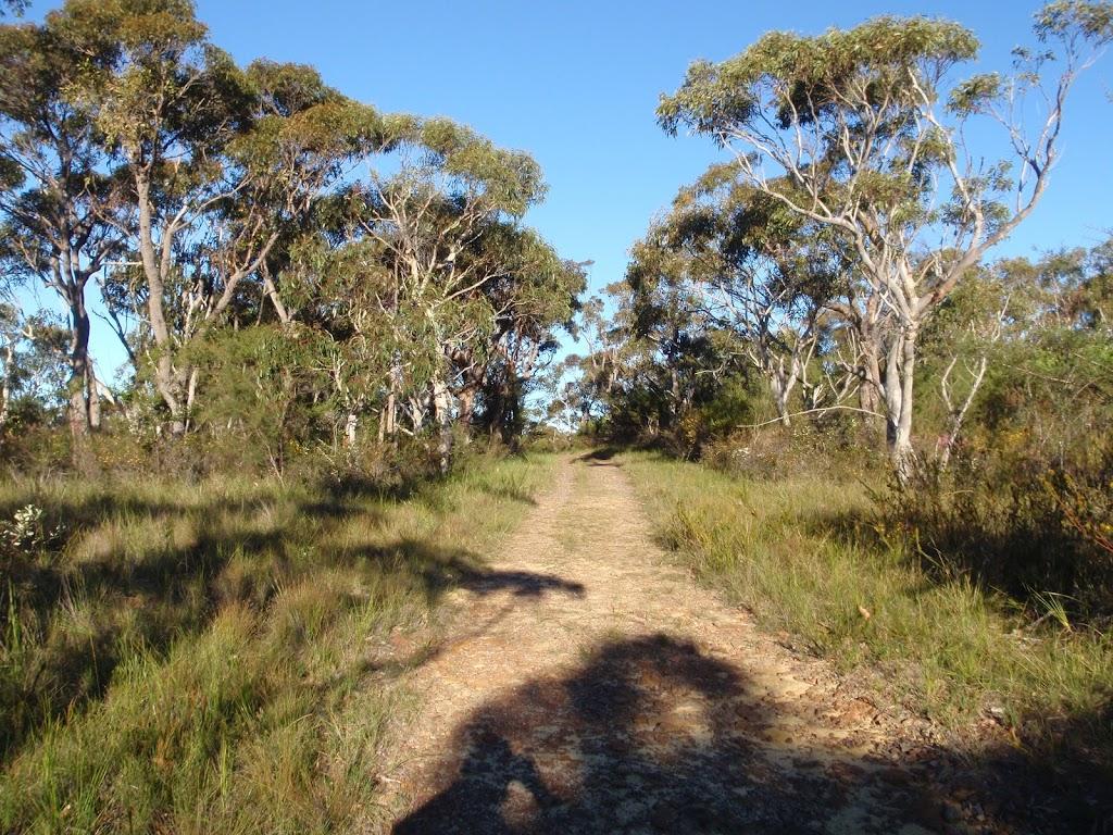 Taller vegetation on Topham track
