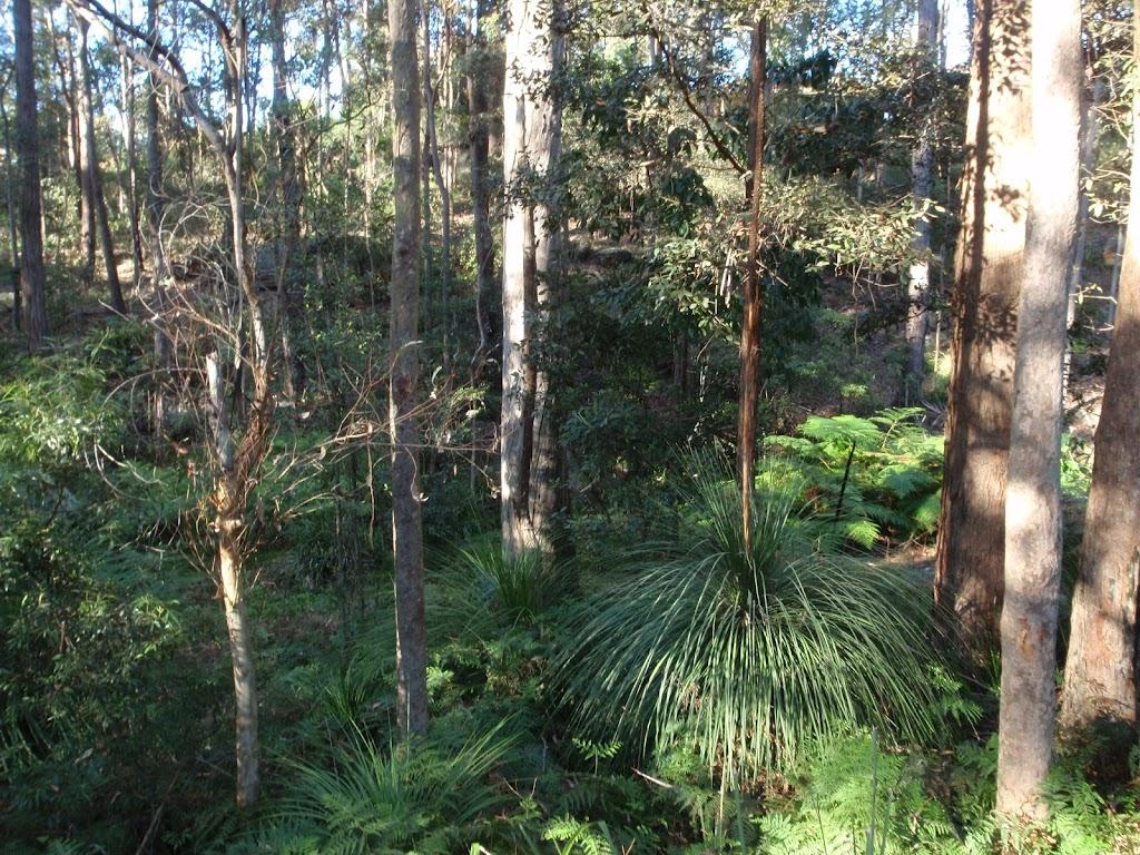 Grass tree on Blackwattle trail