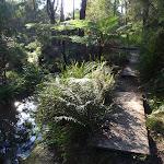 Boardwalk by the creek