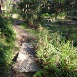 Short boardwalks along Disturbed creek (156928)