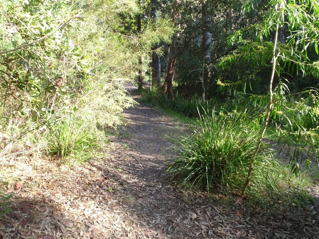 Meandering bush track