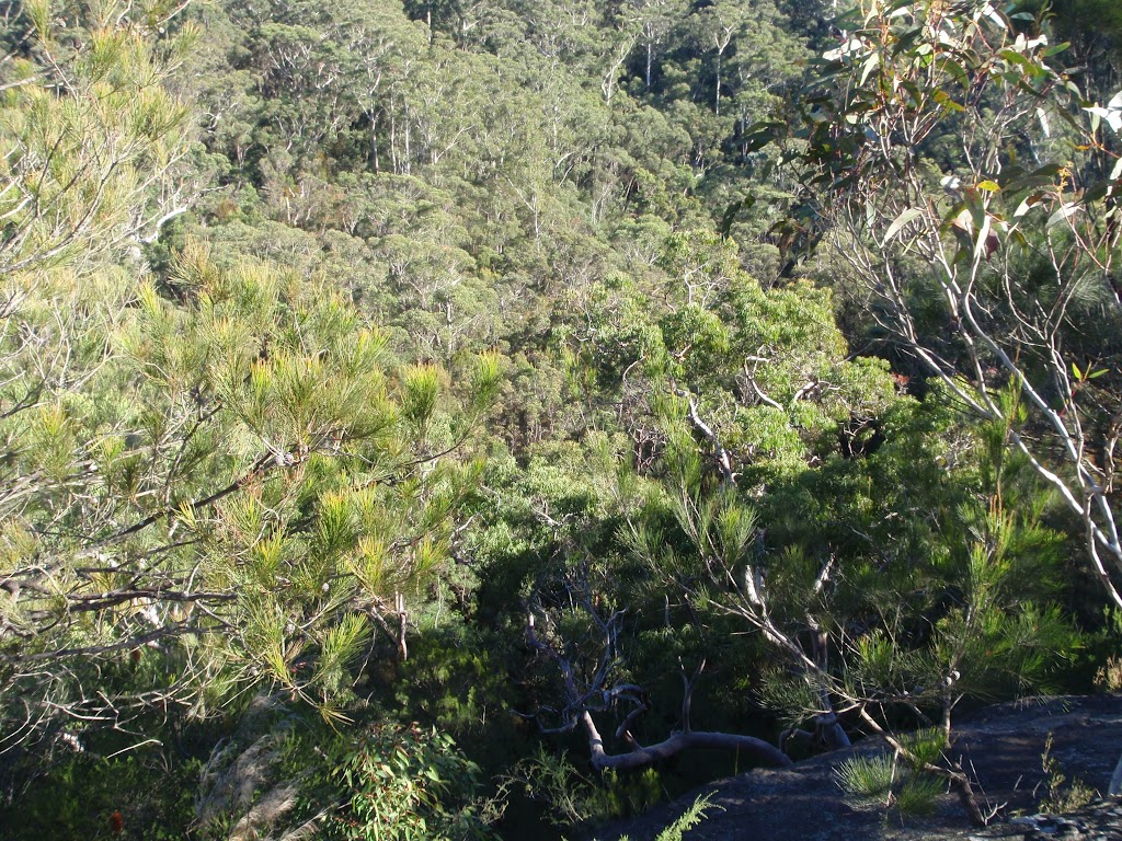 Looking down from Elouera lookout