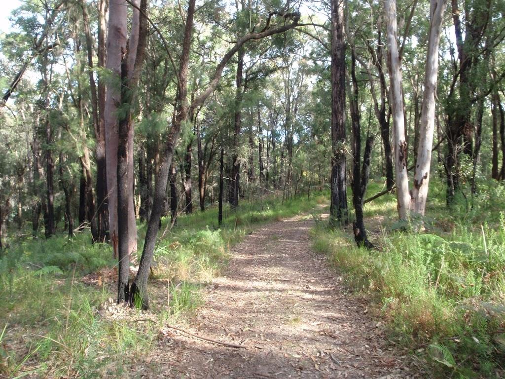 Donovans Forest