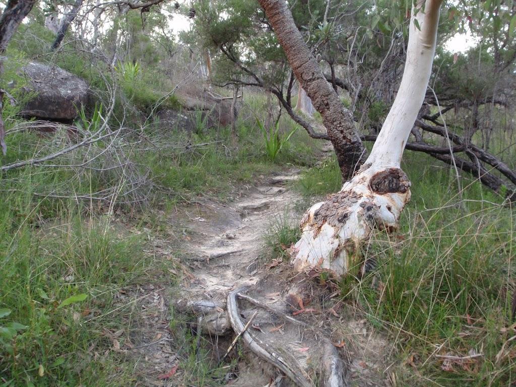 Interesting tree trunks