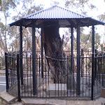 The Explorer Tree (16141)