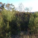 Some heath vegetation along the trail (161938)
