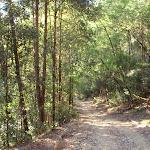 Thick forest near Popran creek (162037)