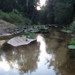 Looking along Popran creek (162073)