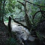 A small tributary of Popran creek (162118)