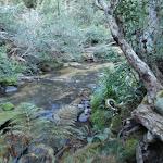 Popran creek (162127)