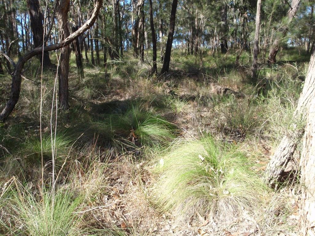 Tussock grass along Finchs Line