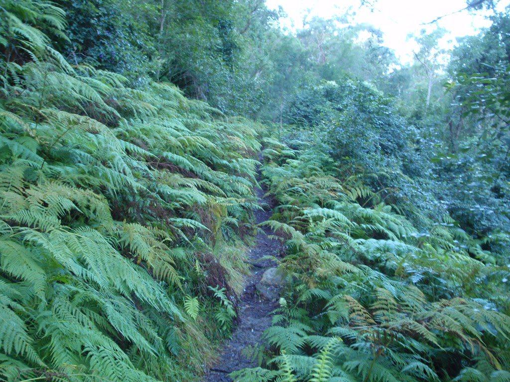Ferns surrounding Finchs Line road