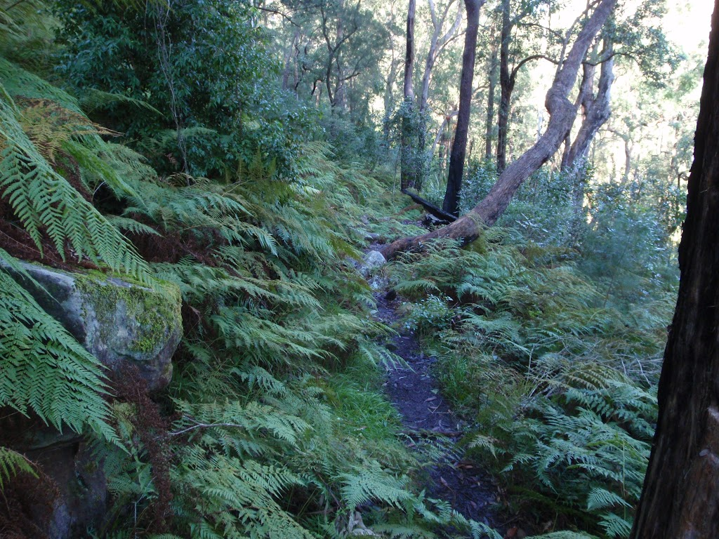 Narrow track through nice ferns (166351)