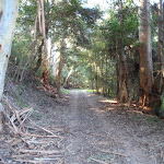 Shady section among the tall gums
