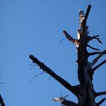 Old Tree (168044)