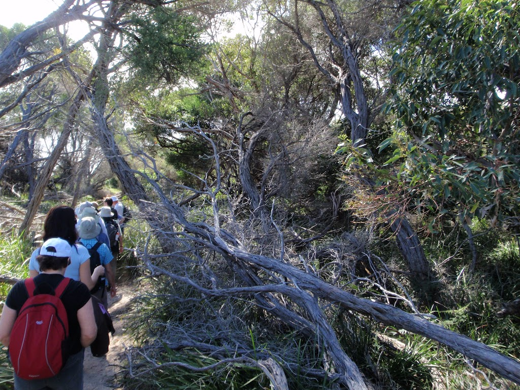 A group walking through the thick scrub