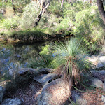 Glimpse of Flat Rock Creek track and a grass tree (172329)