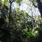 Tall forest and cabbage palms