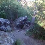 Track below 1st Falls lookout (176958)