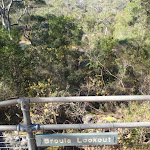 Broula Lookout