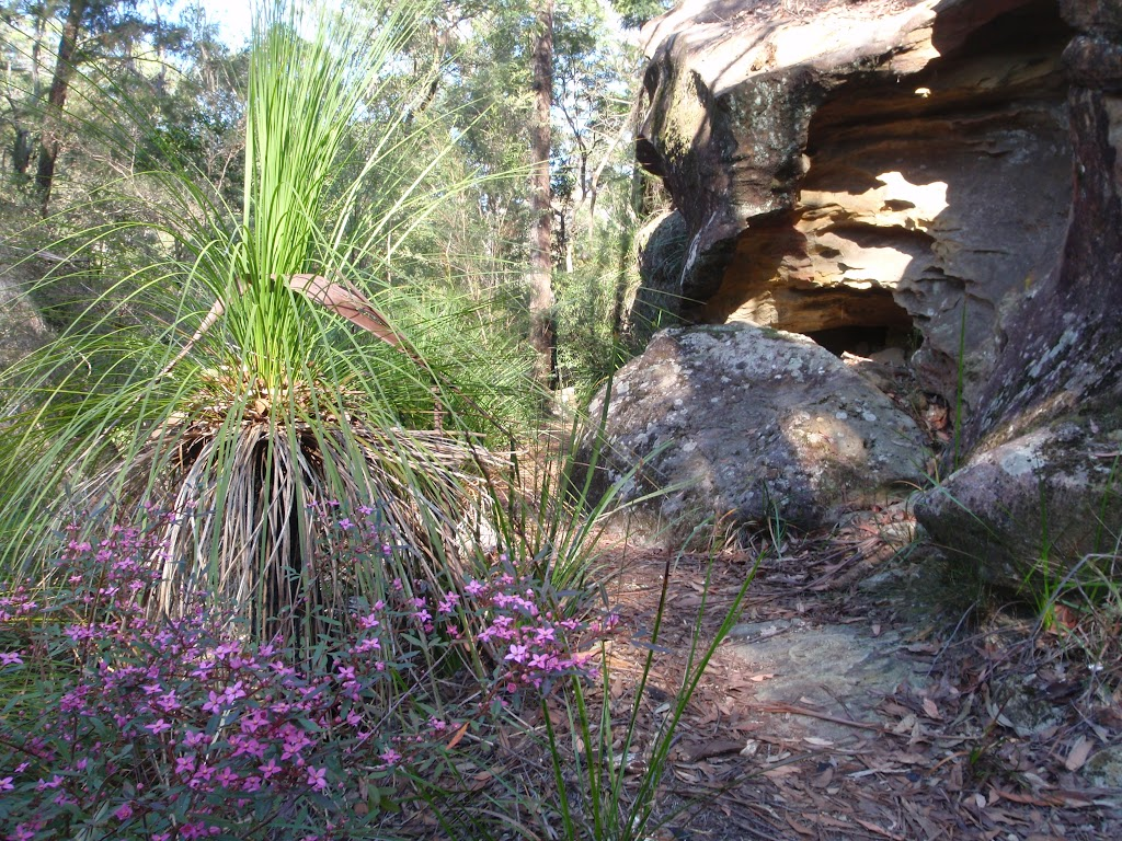 Walking past grass tree and rock formations