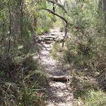 Wandering through the bush (179442)