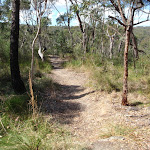Track leading to Aboriginal Engravings (179736)