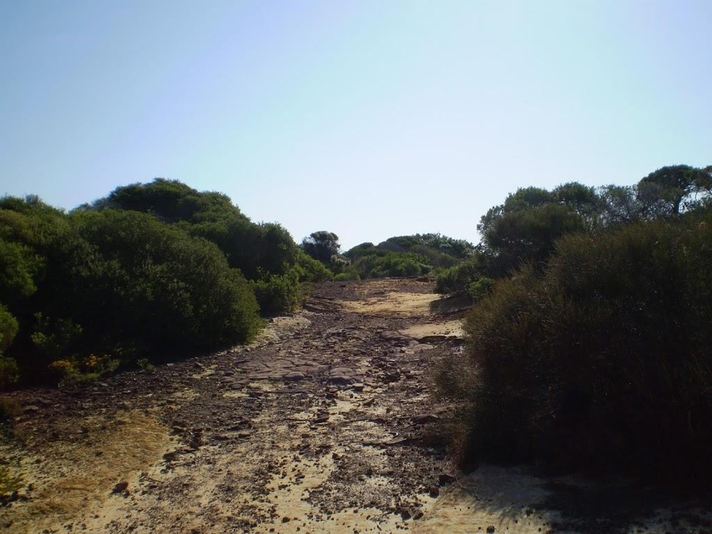 Track near Anzac Rifle Range, Maroubra