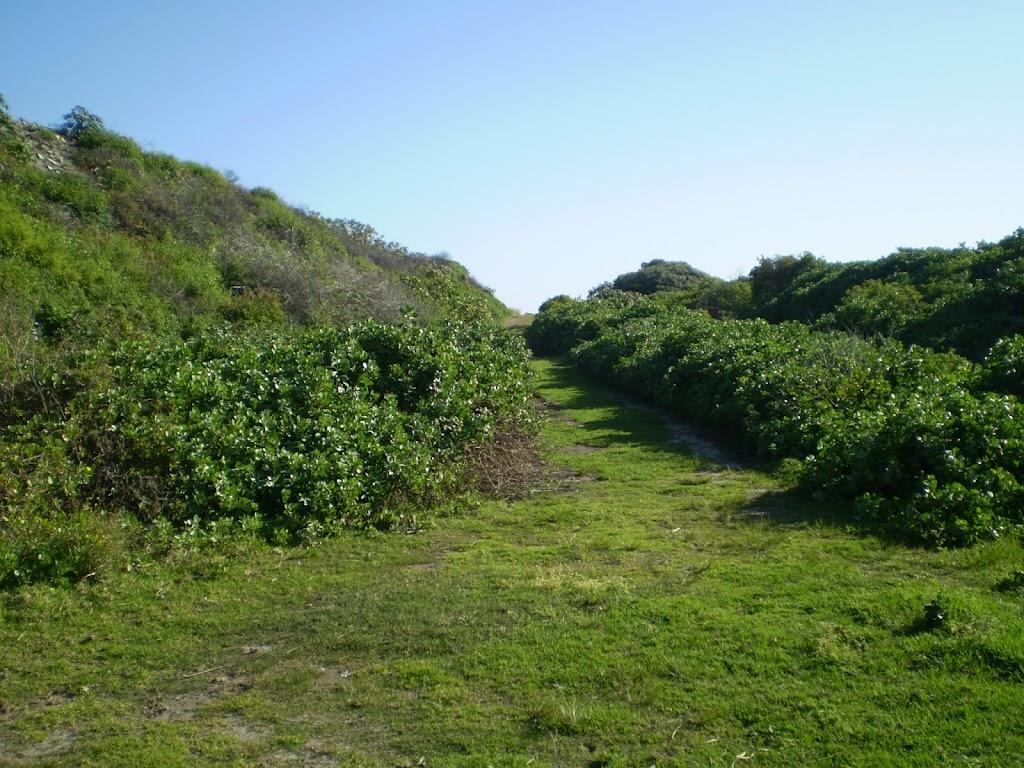 Grassy track near Maroubra Bay
