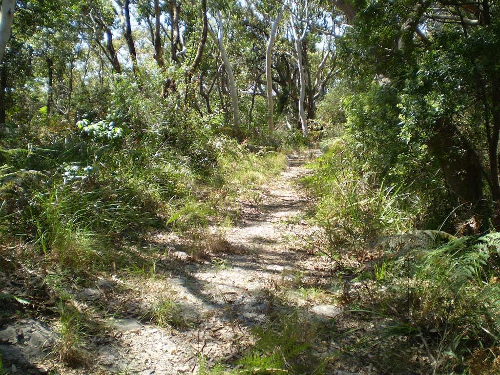 winding through the eucalypt littered forest