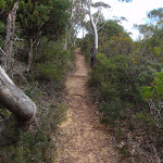 Track to Golf Links Lookout (186282)