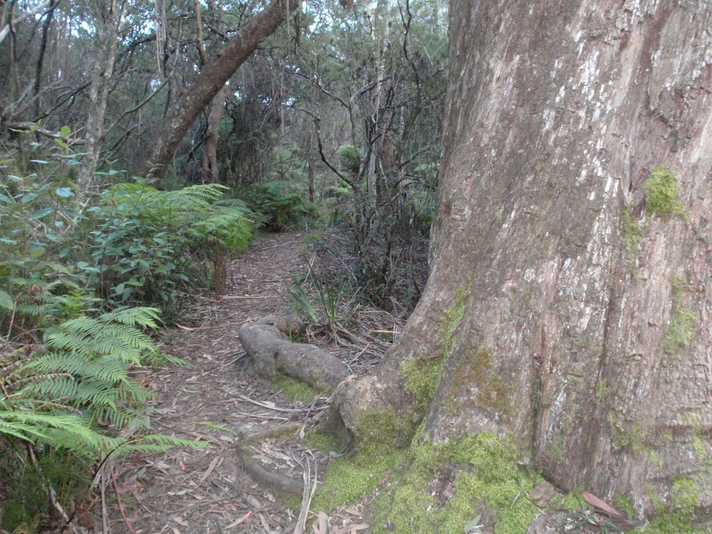 Track between Lyrebird Dell and Pool of Siloam