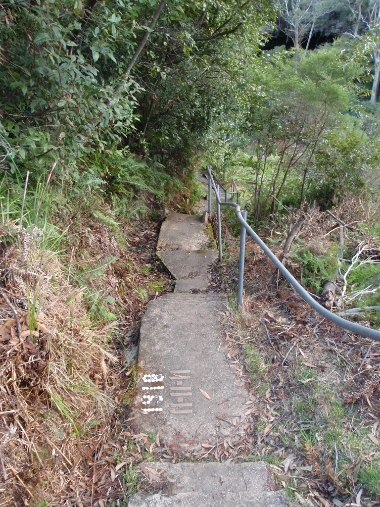 Steps above Lyrebird Dell