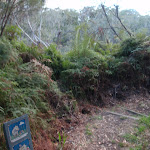 Start of Lyrebird Dell track (186909)
