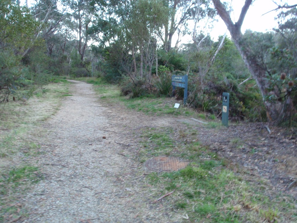 Trail at the top of Lyrebird Dell Track (187014)