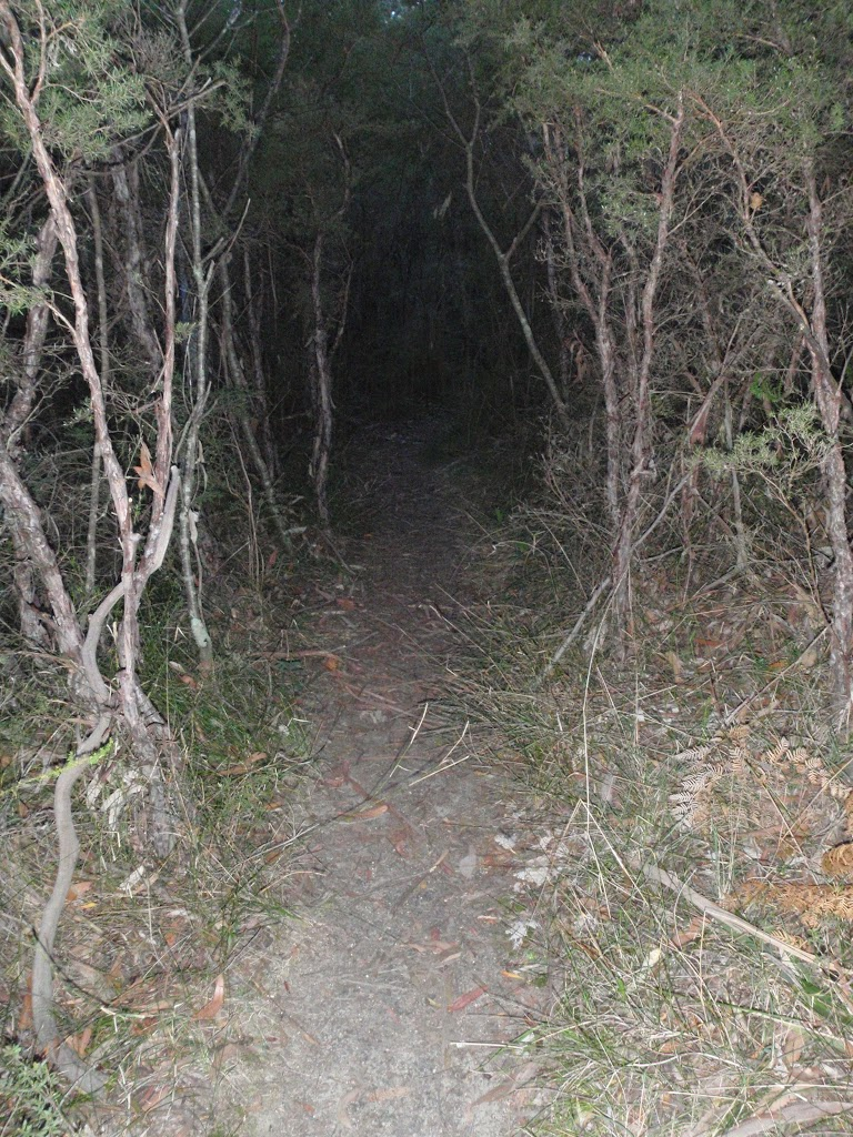 Track winding through the bush