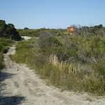 Along Cape Bailey track near Tabbagai Gap (18774)