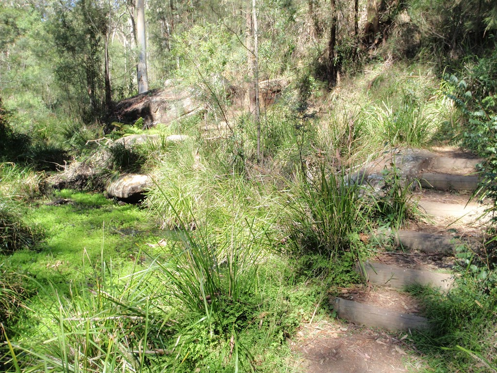Nepean River track next to Euroka Creek (189780)