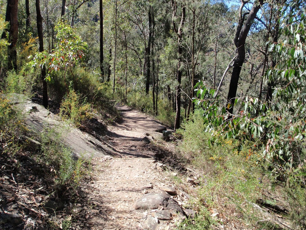 Walking towards Bennetts Ridge track (190164)