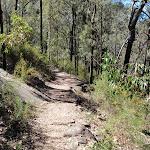 Walking towards Bennetts Ridge track (190164)