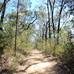 Bennetts Ridge trail (190284)