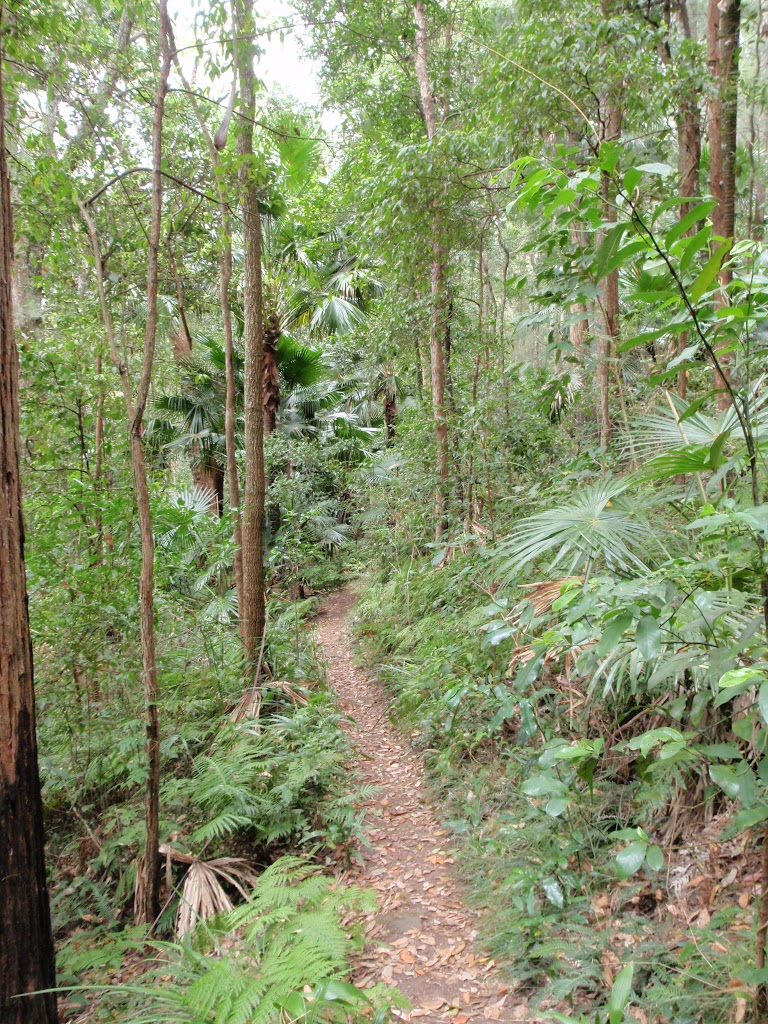 Lush forest track