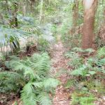 Narrow track (192275)