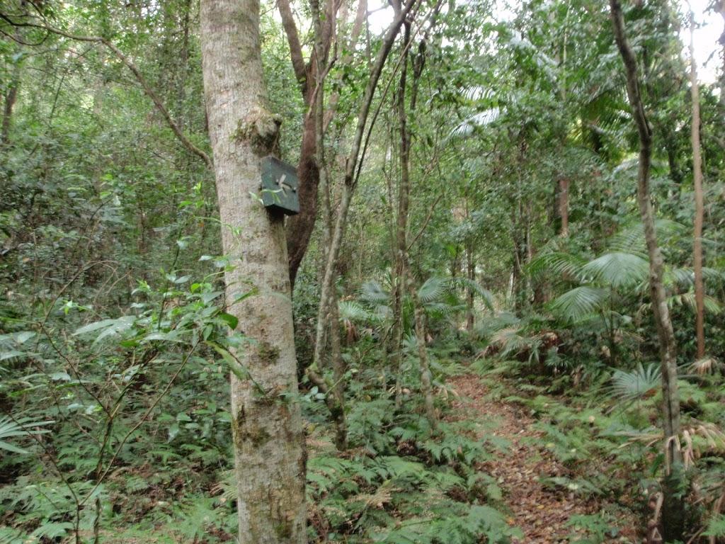 Track arrow on a tree