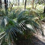 Palms (195497)