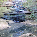 Kariong Brook