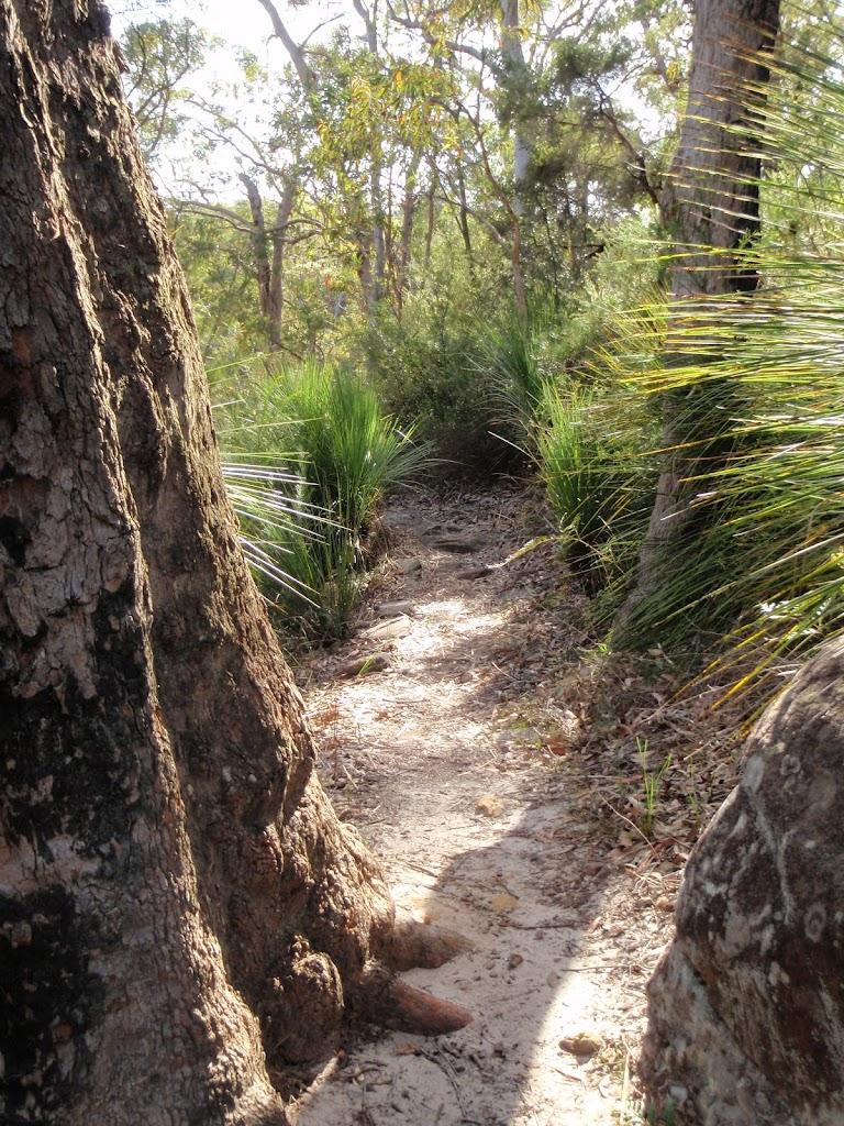 Pleasant bushland  near Kariong Brook
