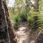 Pleasant bushland  near Kariong Brook (197199)
