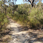 Top of track east of Kariong Brook